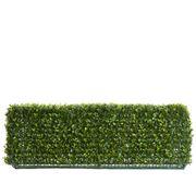 Florabelle - Boxwood Hedge 25x95cm