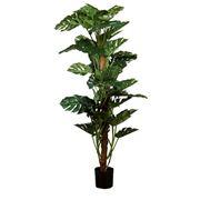 Florabelle - Split-Leaf Philodendron 190cm