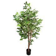 Florabelle - Hornbean tree 150cm