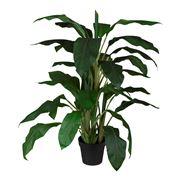 Florabelle - Dracaena in Pot 122cm