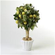 Zanatta - Lemon Bonsai 20x27x20cm
