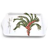 Ashdene - Floral Emblems Kangaroo Paw Scatter Tray