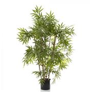 Florabelle - Japanese Bamboo Tree 1m