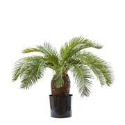 Florabelle - Cycus Palm Tree 65cm
