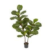 Florabelle - Fiddle Leaf Fig Tree 1.13m