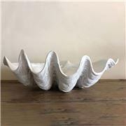 Clam Shells - White Clam Shell Medium 52cm