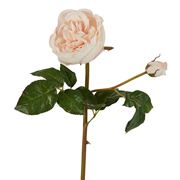 Florabelle - Cabbage Rose Stem Real Touch Blush 47cm