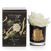 Cote Noire - Single French Ivory White Rose In Black Jar
