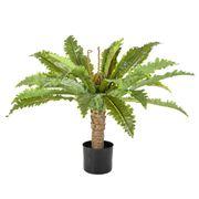 Florabelle - Fern Palm In Black Pot 71cm