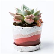Jones & Co - Scape Pot Pink