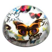 Christian Lacroix - Butterfly Parade Paperweight