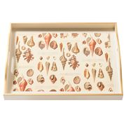 Whitelaw & Newton - Shells On Cream Large Tray