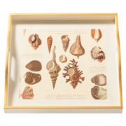 Whitelaw & Newton - Shells On Cream Small Square Tray