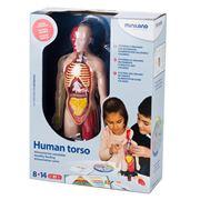 Miniland - Human Torso Digestive System Set