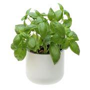 Anasazi - Okidome Suction Planter White