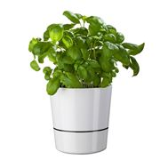 Rosti - Hydro Herb Pot 13cm