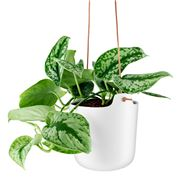 Eva Solo - Stoneware Self Watering Hanging Pot White 15cm