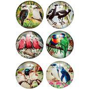 Ashdene - Australian Bird & Flora Magnet Set 6pce