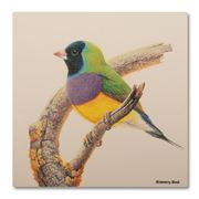 Thirstystone - Gouldian Finch Coaster