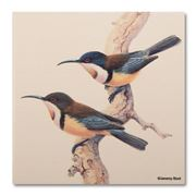 Thirstystone - Eastern Spinebill Birds Coaster