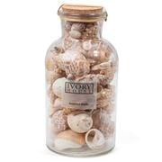 Ivory House - Mixed Shells Tall Jar Natural