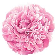Hester & Cook - Die-Cut Placemats Peony