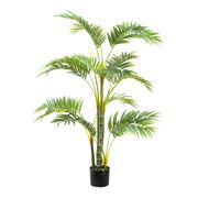 Florabelle - Areca Palm Tree w/Five Trunks 1.2m