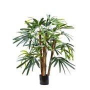 Florabelle - Raphis Palm Tree 1m