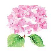 Paper Products Design - Hydrangea Rosé Napkins 33x33cm 20pce