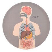 Life Of Jay - Anatomical Bamboo Fibre Organs Plate