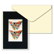 Short Story - Blue Twin Butterfly Greeting Card