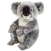 National Geographic - Koala