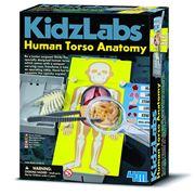 Kidz Labs - Human Torso Anatomy Kit