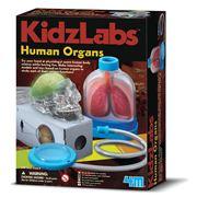 Kidz Labs - Human Organs Science Kit
