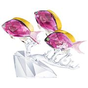 Swarovski - Anthias Fish Trio