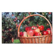 Doormat Designs - Apple Basket Doormat