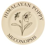 Big Tomato Company - Botanicals Himalayan Poppy Plate