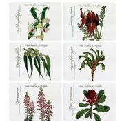 Ashdene - Floral Emblems State Flowers Placemat Set 6pce